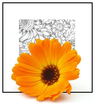 Perfumes nicho - florales